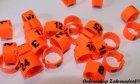 Clipsringe 16 mm nummeriert 1-25 leuchtend orange 25 Stück